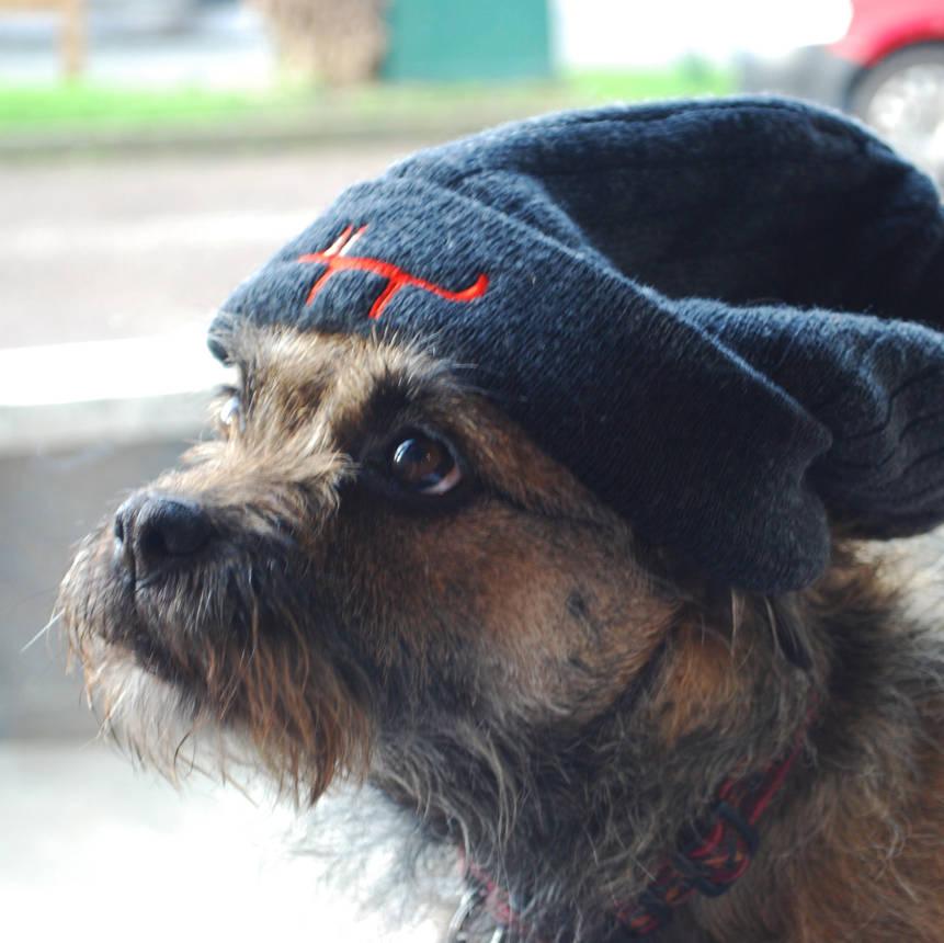 Izzy the dog wearing beanie hat